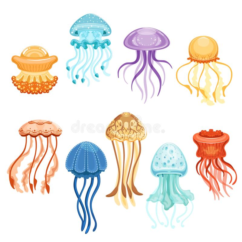 Colorful jellyfish set, swimming marine creatures watercolor vector Illustrations vector illustration
