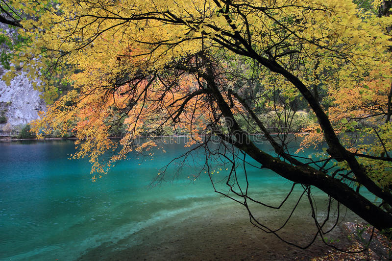 Water, nature, reflection, leaf, tree, autumn, woody, plant, vegetation, lake, branch, deciduous, bank, woodland, morning, sunligh. Photo of water, nature royalty free stock images