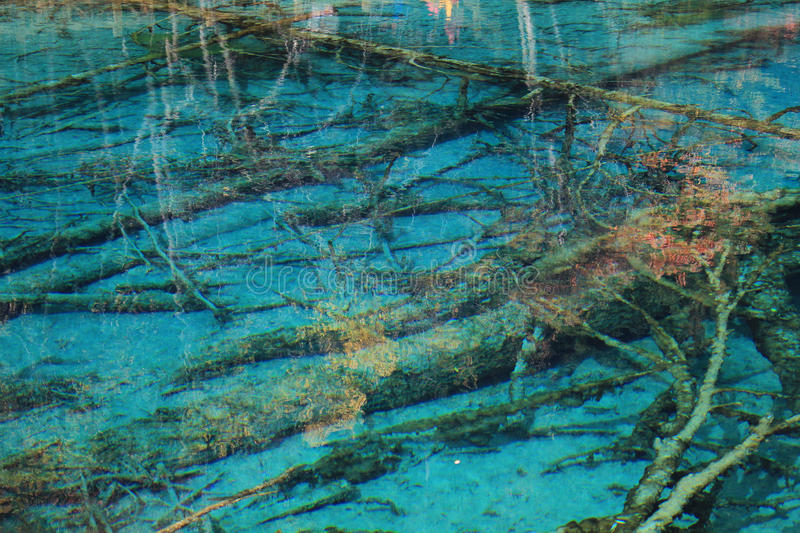 Water, green, reef, reflection, texture, organism, tree, wetland, marine, biology. Photo of water, green, reef, reflection, texture, organism, tree, wetland royalty free stock images