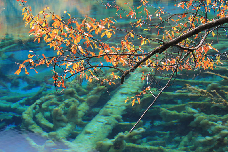 Water, nature, ecosystem, branch, tree, organism, reef, marine, biology, coral, underwater, sky. Photo of water, nature, ecosystem, branch, tree, organism, reef royalty free stock photography