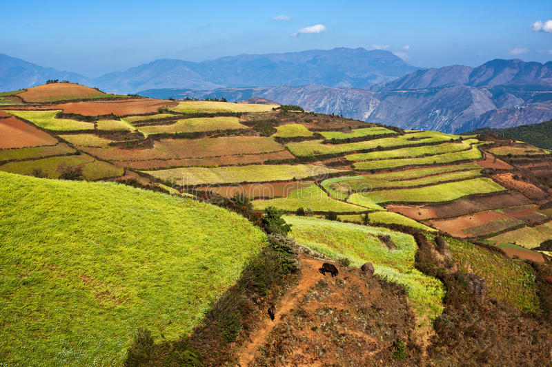 Colorful Land Stock Images