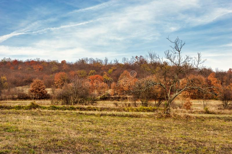 Colorful landscape in autumn. Beautiful autumn countryside landscape in the afternoon with many colors. Beauty of nature concept stock photo