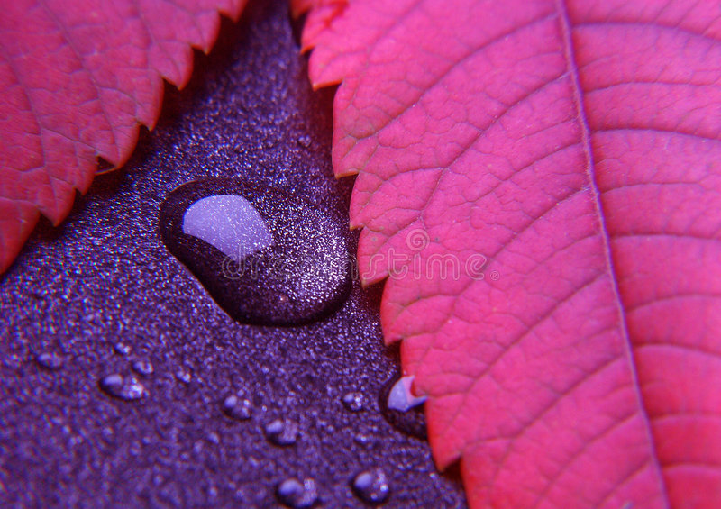 Colorful leaf. In botany, a leaf is an above-ground plant organ specialized for photosynthesis. For this purpose, a leaf is typically flat (laminar) and thin, to royalty free stock photo