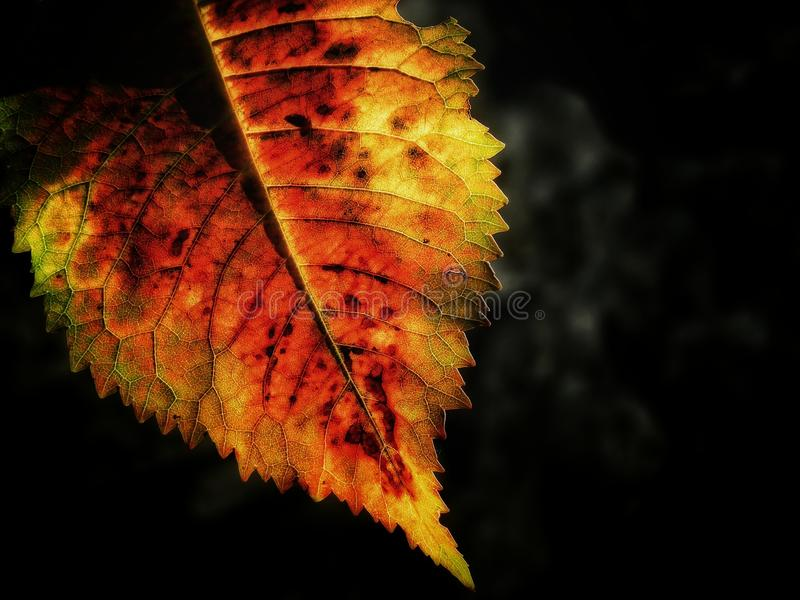 Leaf at autum stock photography