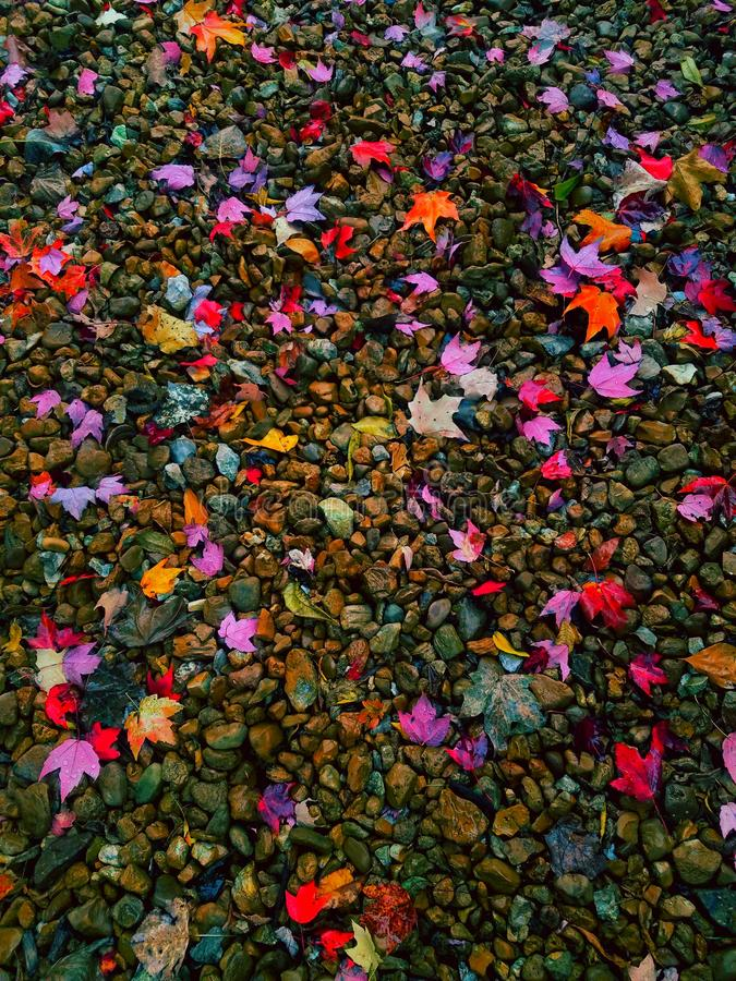Colorful leafy covered pebbles royalty free stock photography