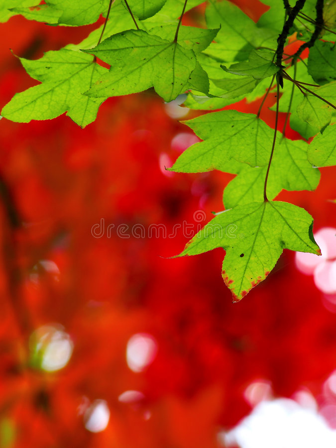 Colorful leave and fall forest royalty free stock photography