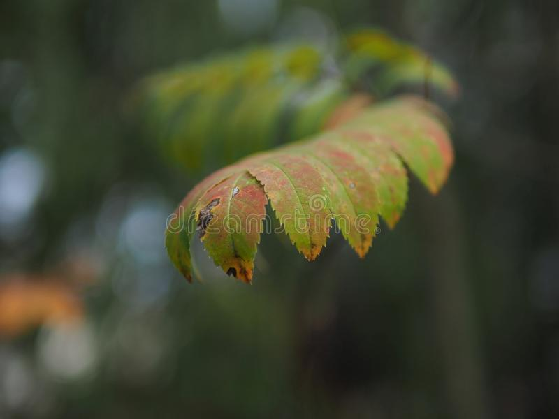 Colorful Leaves Free Public Domain Cc0 Image