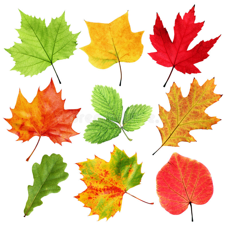 Free Colorful Leaves Stock Photography - 5761642