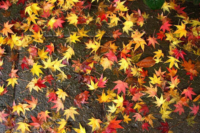 colorful leaves 2 stock image
