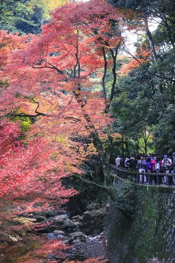 Colorful leaves autumn tourism travel season landscape scenery in Osaka and Kyoto Japan stock photos