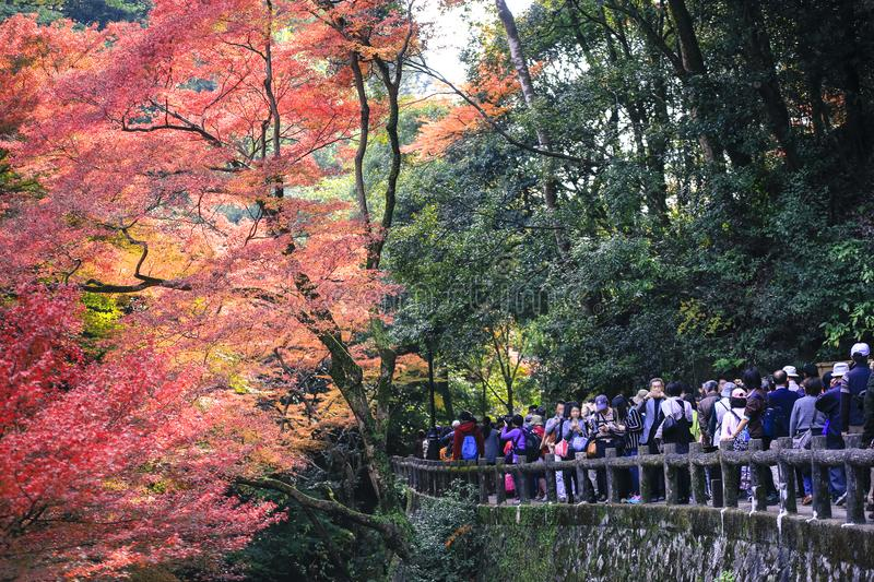 Colorful leaves autumn tourism travel season landscape scenery in Osaka and Kyoto Japan. Asia royalty free stock images
