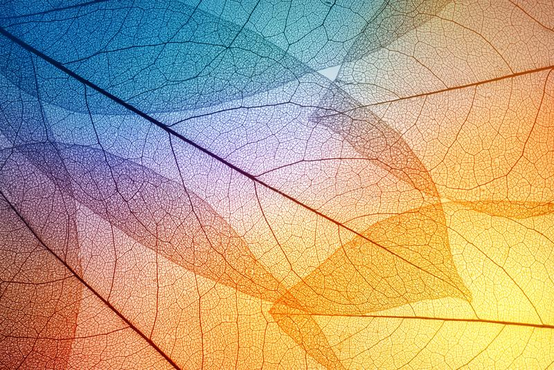 Colorful leaves background. Leaf texture. stock image