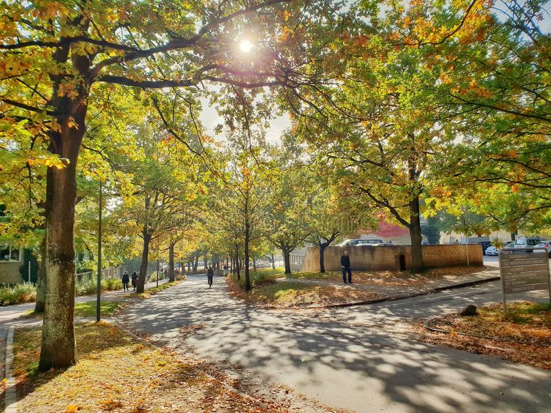 Autumn in Aarhus, Denmark. The colorful leaves on the campus of Aarhus University creates an intricate pattern on the small streets and pavements in the park royalty free stock photos