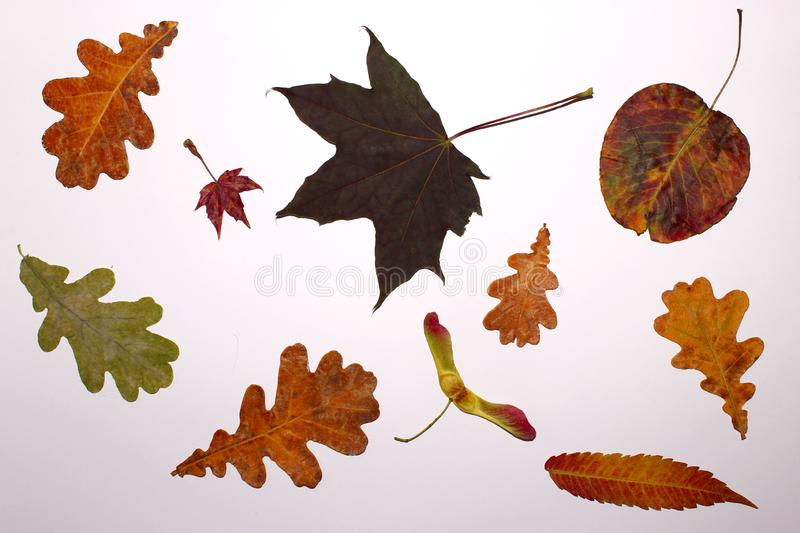 Nature, Autumn Concept. Nature Background. Colorful Leaves Over White Background. Nature, Autumn Concept. Nature Background royalty free stock photography