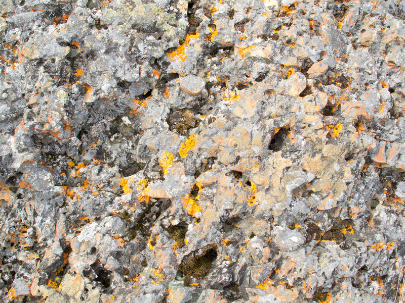 Colorful Lichens on Rocky surface Background. Background texture pattern: Close-up of lichen cover growing on rock surface stock photo