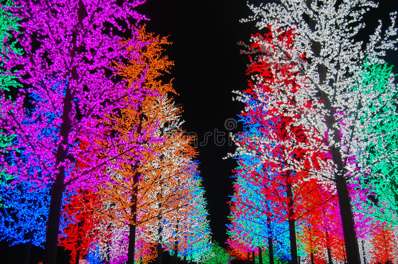 Colorful Light tree royalty free stock photo