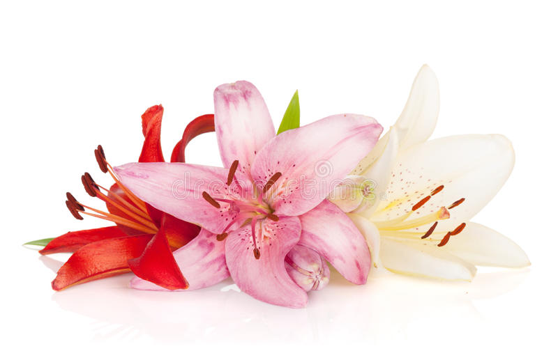 Download Colorful lily flowers stock photo. Image of leaf, easter - 33828638