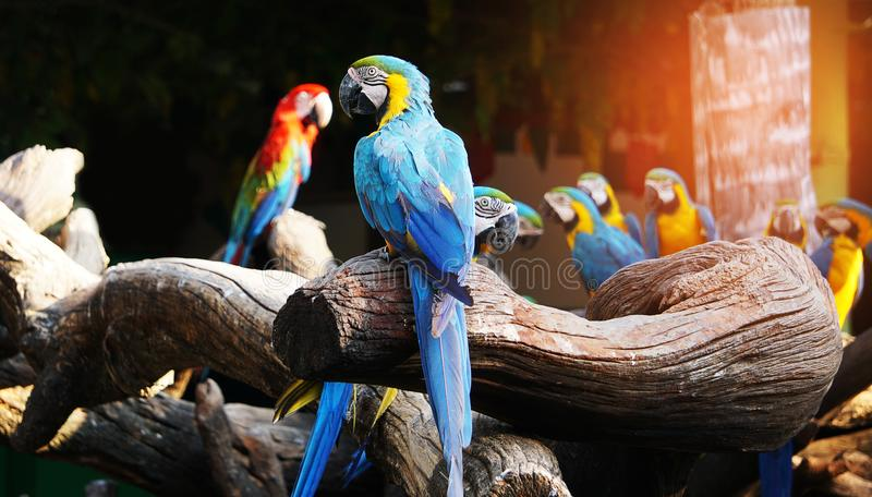 Colorful macaw bird. stock photography