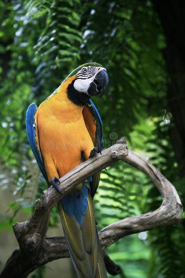 Colorful Macaw bird at tree branch on nature background royalty free stock photography