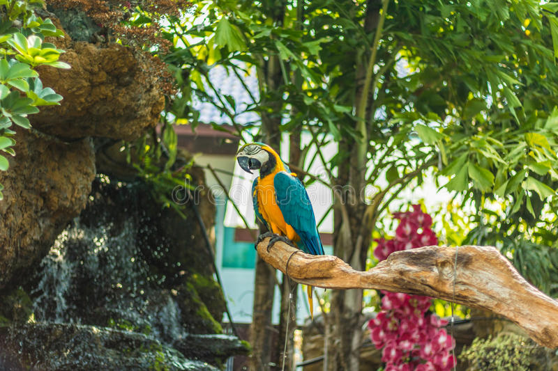 Colorful Macaw. On a branch royalty free stock photo