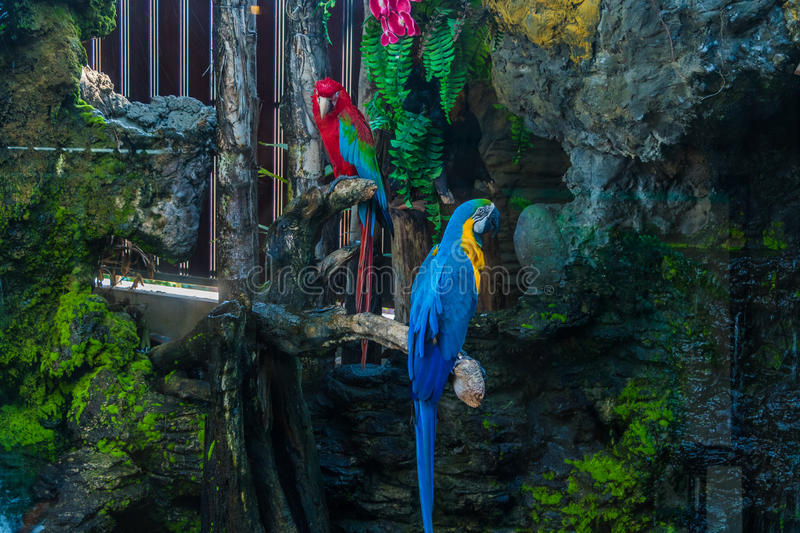 Colorful Macaw. On a branch stock photo