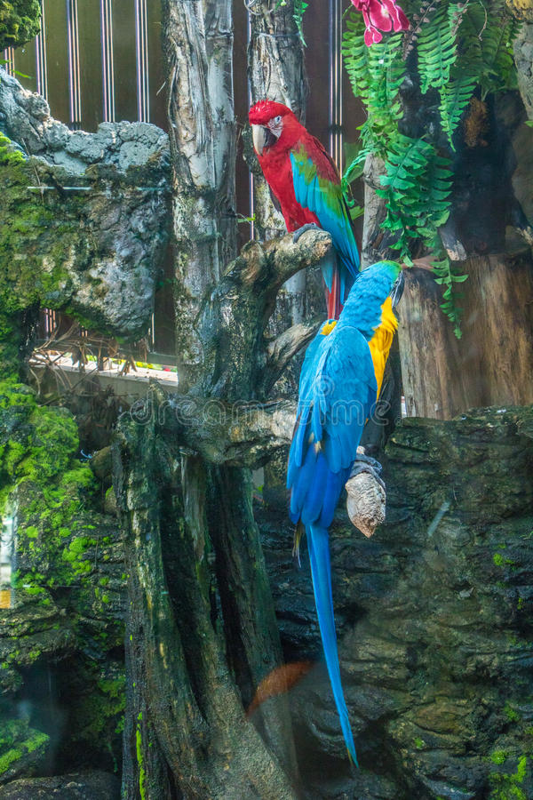 Colorful Macaw. On a branch stock photos