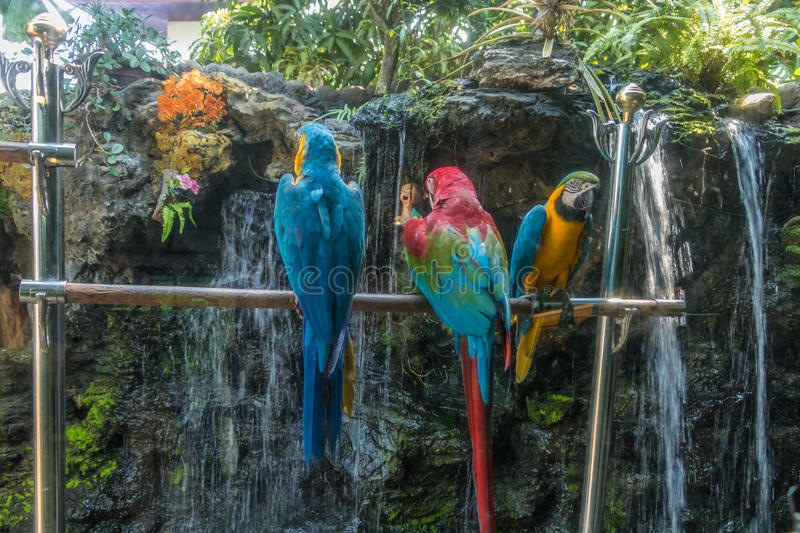 Colorful Macaw. On a Steel stock photo