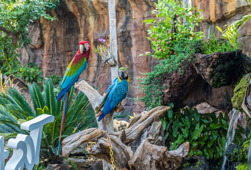 Colorful Macaw royalty free stock photography