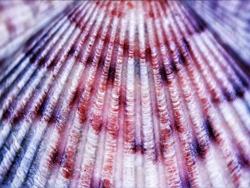 Colorful Macro Sea Shell Background Abstract Pattern stock images