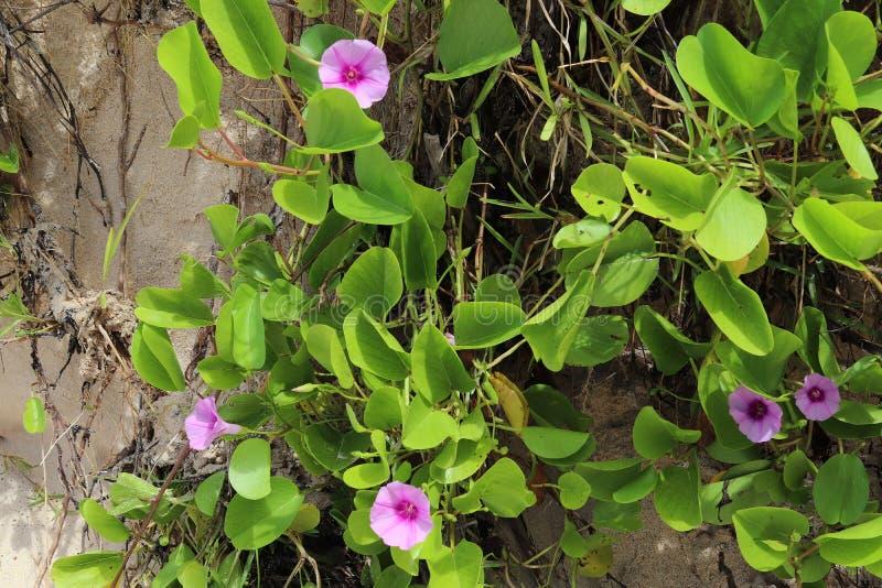 Colorful macro shots of flowers on the Seychelles island stock image