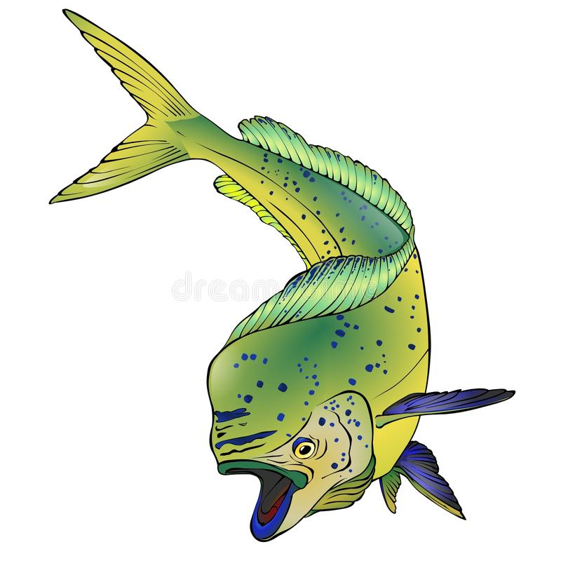 Colorful Mahi Mahi Fish Vector Illlustration stock photography
