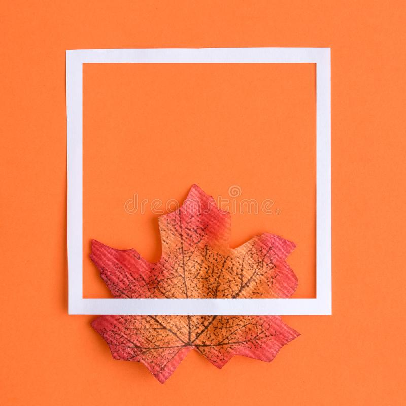 Colorful maple leaf with white frame as autumn symbol abstract stock photo