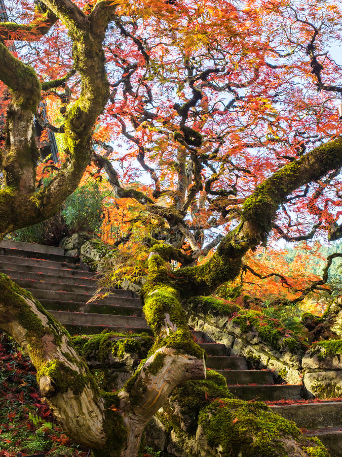 Free Colorful Maple Leaves Along A Flight Of Stairs Stock Images - 47178994