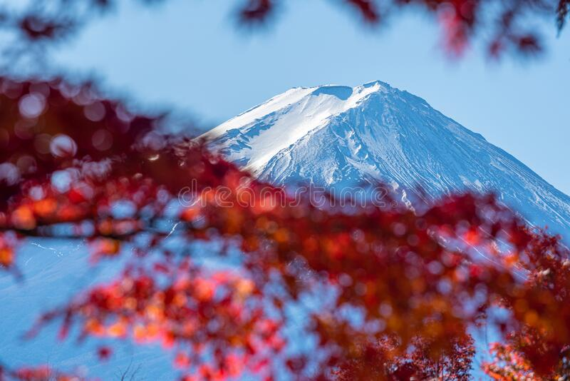Mount Fuji betide colorful maple leaves autumn season on nature background royalty free stock photography
