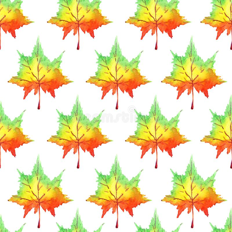 Colorful maple leaves, hand painted watercolor illustration, seamless pattern design. Colorful maple leaves, hand painted watercolor illustration, seamless royalty free illustration