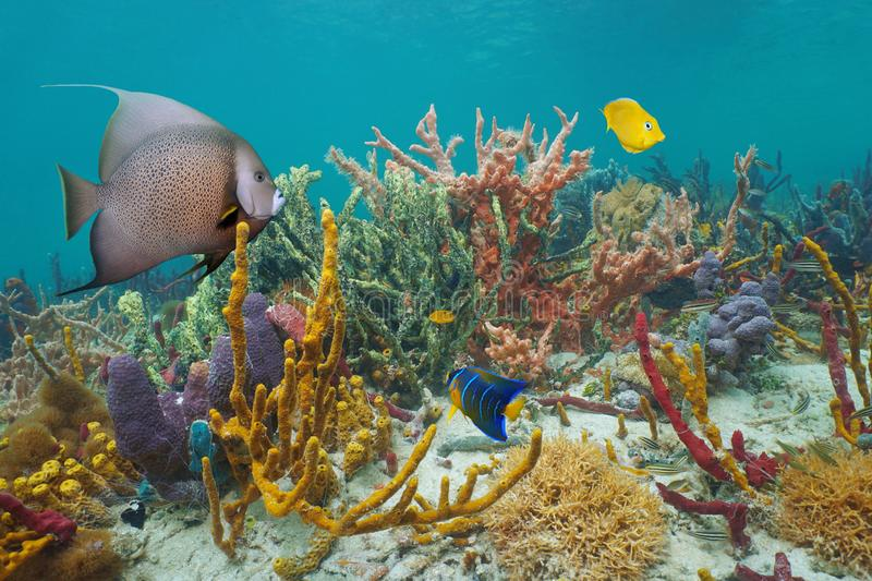 Colorful marine life in a reef of the Caribbean sea stock photo
