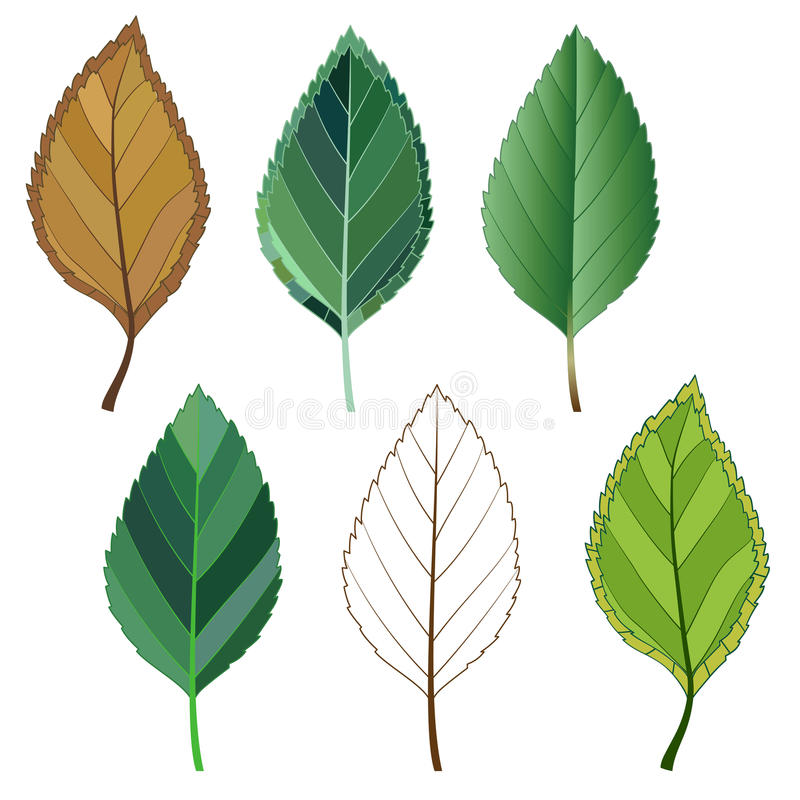 Colorful mosaic apple leaves. isolated. easy to modify. stock photography