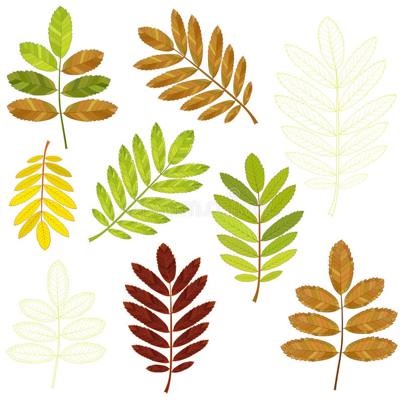 Colorful mosaic rowan leaves. isolated. easy to modify. stock photos