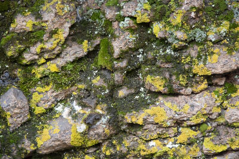 Colorful moss on the rock. Stone natural background with moss. View from above royalty free stock images