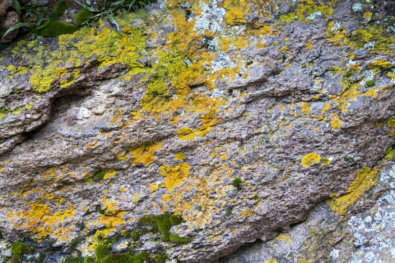 Colorful moss on the rock. Stone natural background with moss. View from above stock image