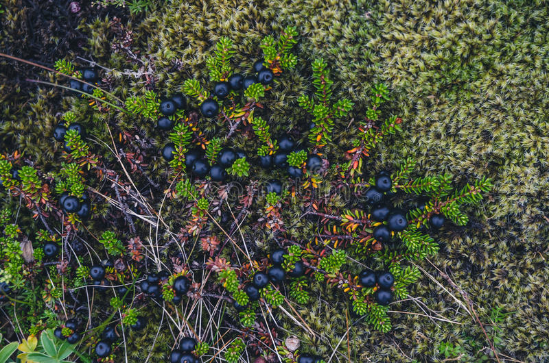 Colorful moss textures royalty free stock photo