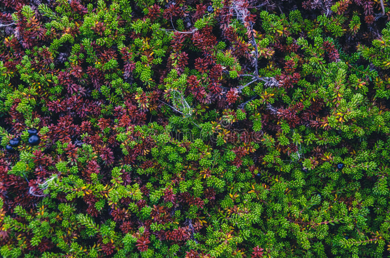 Colorful moss textures royalty free stock photos
