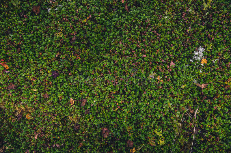 Colorful moss textures stock image