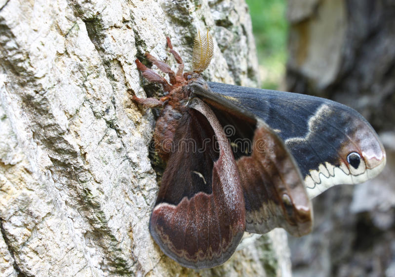 Download Colorful Moth stock image. Image of moth, design, outdoors - 26097829