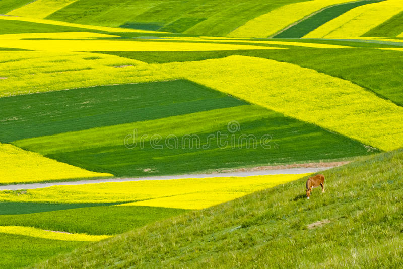 Colorful Mountain Landscape stock images