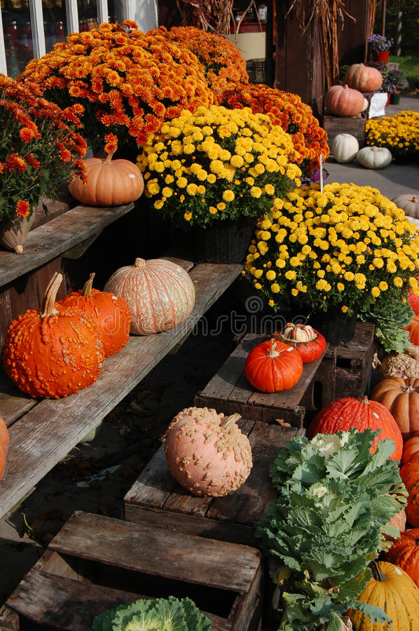 Colorful Mums at a Fall Farmers Market