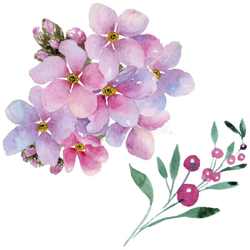 Colorful myosotis. Floral botanical flower. Wild spring leaf wildflower isolated. Aquarelle wildflower for background, texture, wrapper pattern, frame or vector illustration
