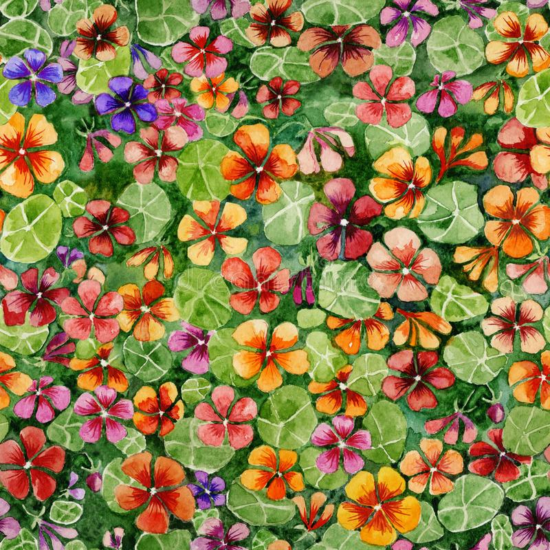 Colorful nasturtium flowers with leaves on green background. Bright seamless floral pattern. Watercolor painting. stock illustration