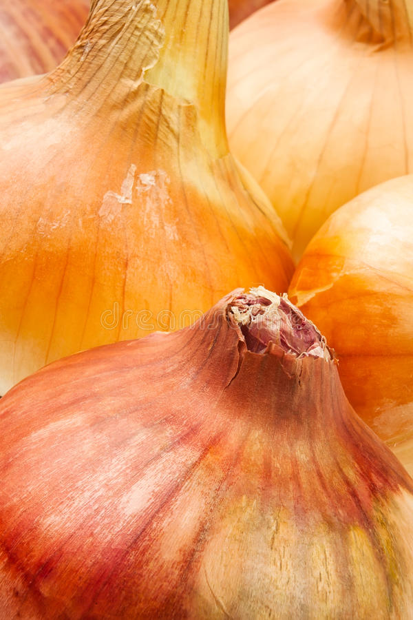 Download Colorful onions stock image. Image of onion, vivid, root - 25649855