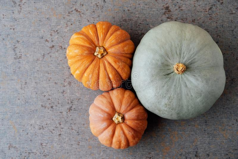 Colorful orange and mint green pumpkins on gray background, top view. Copy space for text. Thanksgiving food preparations royalty free stock photos